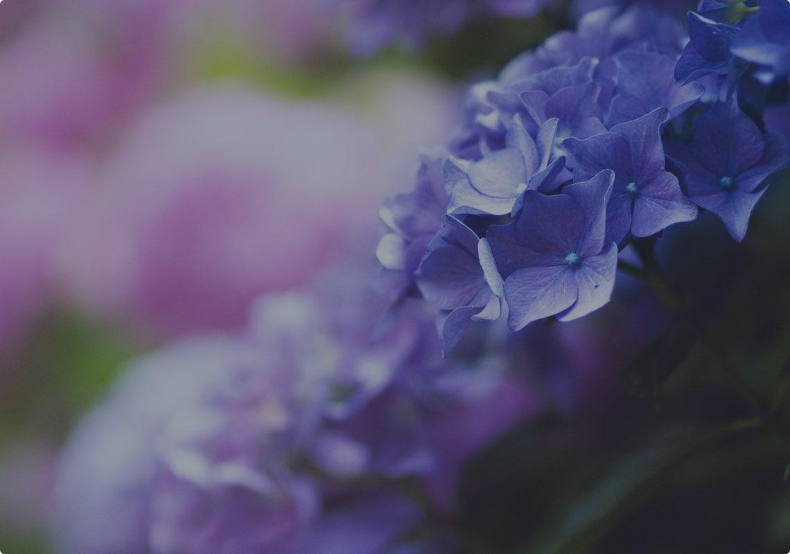 Funeral arrangements - flowers and floral arrangements.